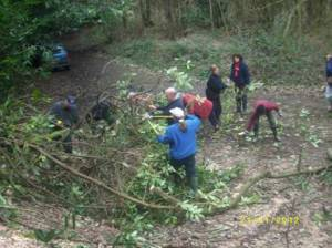 Usk Conservation and Environmental Group spend a session clearing invasive laurel at Cefn Ila.